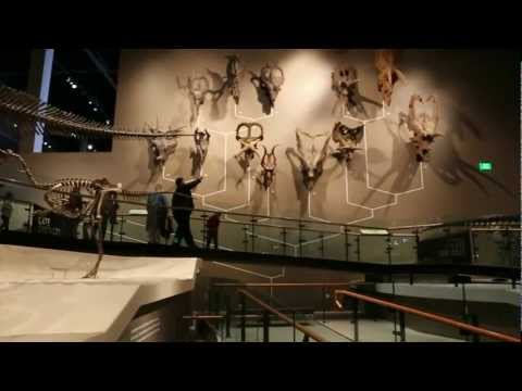 Canon5d III Video Test - Utah Natural History Museum