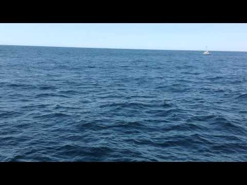 Fish Jumping to the Water Surface on a whale watch to Boston July 2014