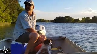 Boater Comes Across A Dog Who's Gotten Too Tired To Swim