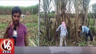 Medak Sugarcane Farmers In Concern With Nizam Sugar Factory Closure