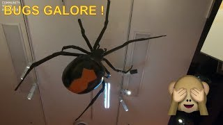 Visiting Melbourne Museum - Insects Alive ( UHD )