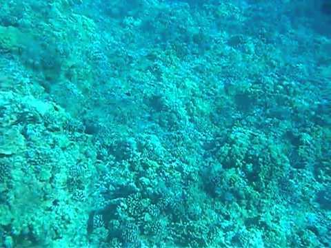 Snorkel Maui Molokini Molokini Island Snorkel Cruise
