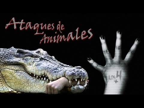 ACCIDENTES MORTALES EN SHOWS CON ANIMALES//TOP//LOS4MÁS