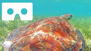 Underwater VR Snorkeling Samsung Gear VR Turtle Google Cardboard SBS not 360
