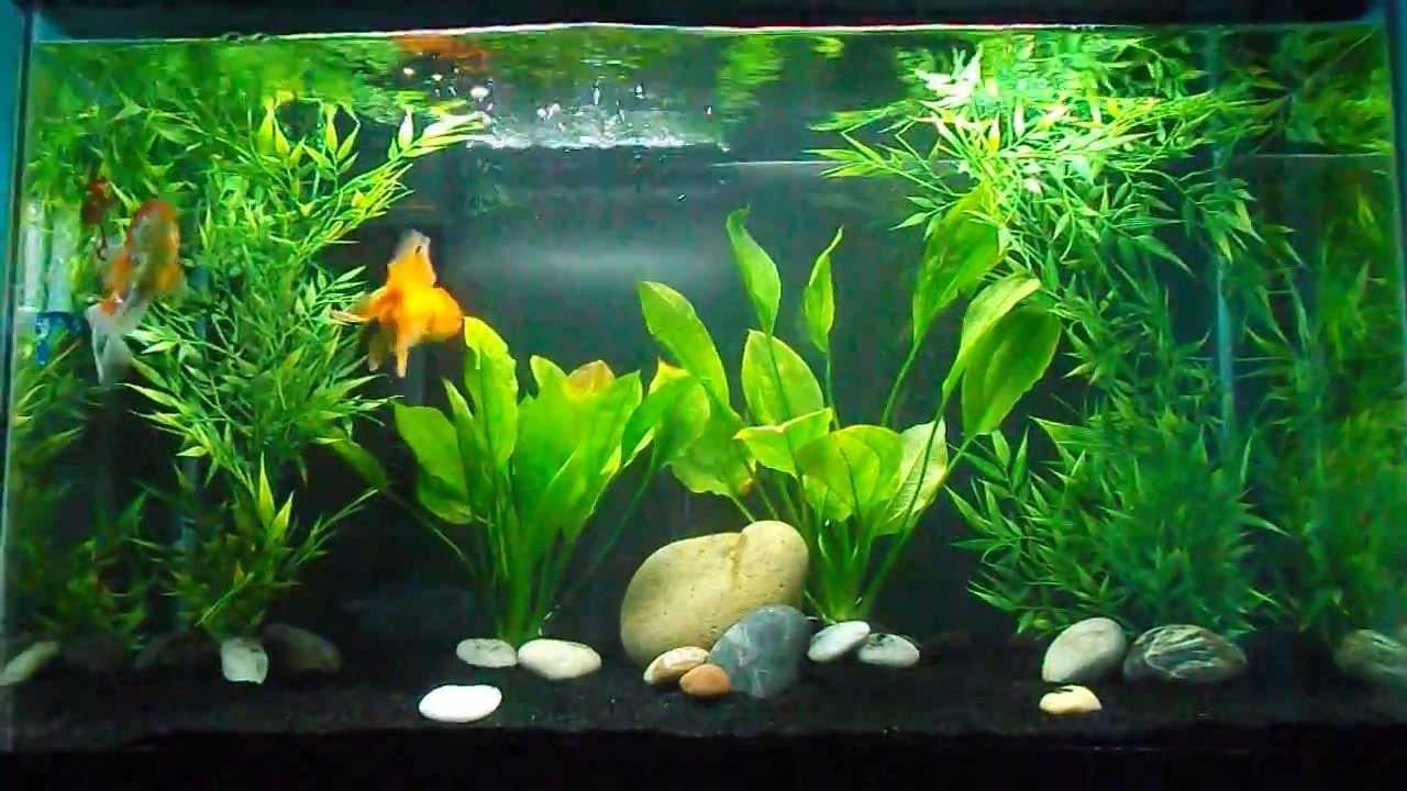 Goldfish Tank Set Up Youtube