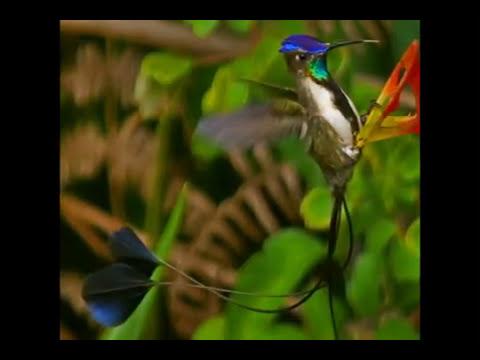 TARAPOTO - EXPLORING DREAMS PERU