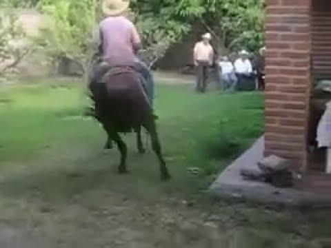 Caballo bailarin