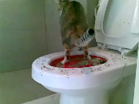 Cat On The Toilet Youtube