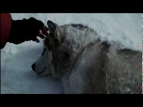 rescate en la antartida lobos