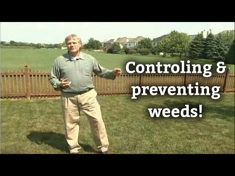 How to Control Weeds -- Lawn Care Tips & Weed Prevention