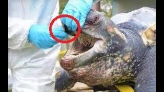 12 Most Dangerous Turtles Ever
