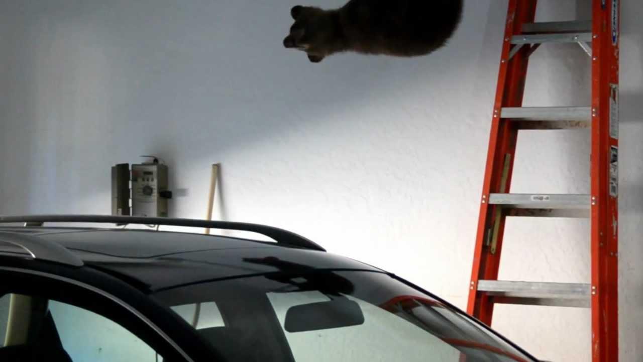 Un ourson coincé dans le garage, sa mère ouvre la porte