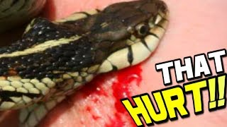 MOM AND BABY SNAKES BITE ME!! LIVE BABY SNAKE BIRTH! | BRIAN BARCZYK