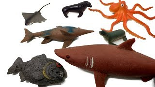 Learn 11 Sea  Animals names 3D Toys Animals Surprise for kids Wood Chips for Children