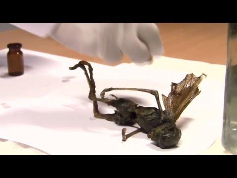 Extraña criatura es encontrada en México ¿Hada, alienígena o un raro animal?