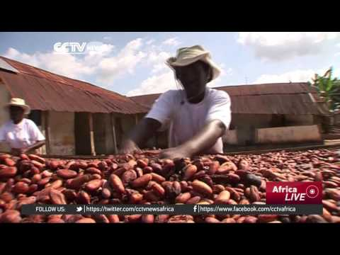 Ghana cocoa farmers say harsh weather could affect mid-year crop