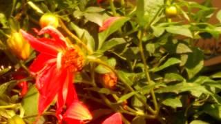 Honey Bee / GHS2/KTS/Sector 2 /Hazara