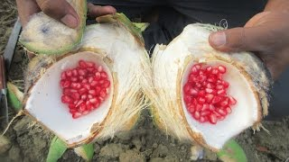 Fresh Tender Coconut Mix With Pomegranate fruit | VILLAGE FOOD