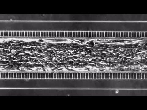 قلب بشري على رقاقة – science
