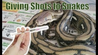 How to Give Injections to Aggressive Snakes