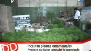 Supuesto contrabando de plantas ornamentales - 26/05/14