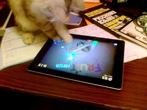 Gatos - Gato ninja jugando con tablet iPad