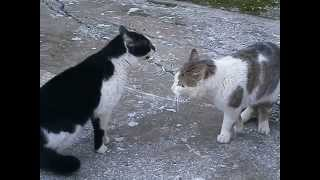 TWO MALE CATS in the backyard 2