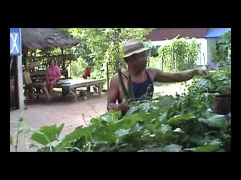 การปลูกผักพื้นบ้าน