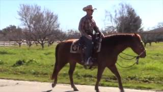 How to avoid a freak accident with horses -Riding on the road with traffic