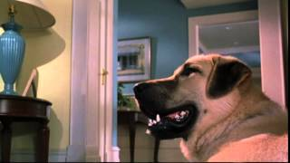 Cats & Dogs - Trailer
