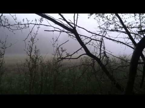 Foggy Kansas Spring turkey decoy vs deer