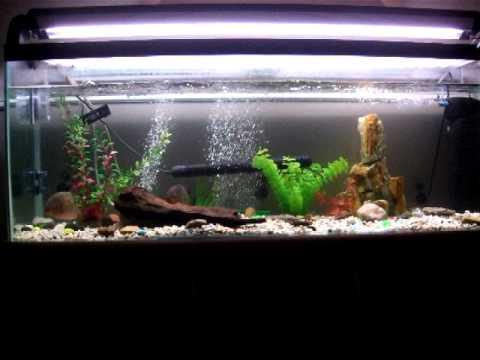 Piranha Fish Tank Piranha 4 Foot Tank Set up