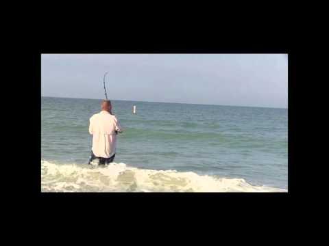 Bonnethead Shark caught at Sand Key Park Clearwater Beach FL