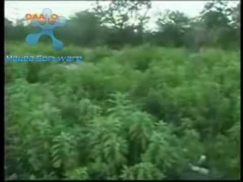 Qurux Dumar video
