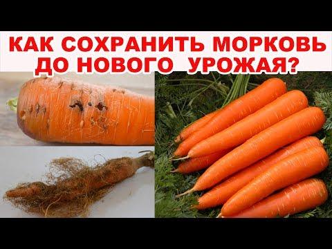 Гниёт и сохнет морковь? Очень полезный совет, как сохранить морковь до нового урожая
