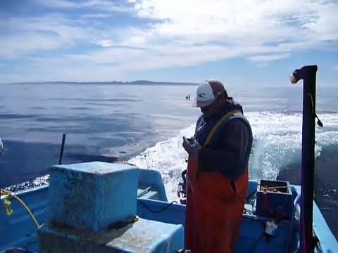 el chapis & el mayito isla natividad 13/feb/2011