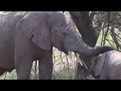 BABY ELEPHANT AND HER MOTHER