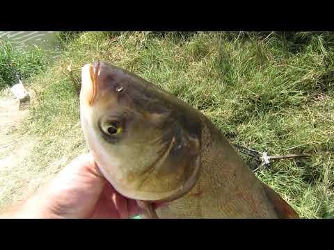 Рыбалка секрет как Поймать ТОЛСТОЛОБА  Толстолобер