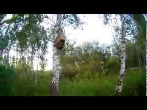 как ловить пчелиный рой ловушками