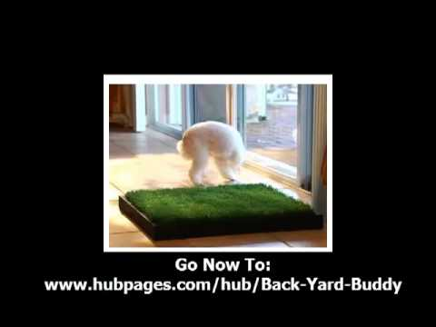 Potty Training Puppies on Dog Potty Training   Back Yard Buddy   Potty Training Puppies Info