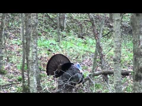 Ohio Spring Turkey Season 2013 - Opening Day - Big Gobbler Down!