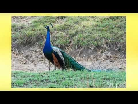 India wildlife sanctuaries