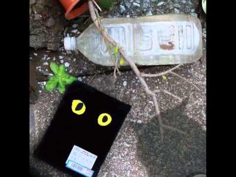 黒猫チェルシ (Kuroneko Chelsea) - FUNKY GIRL