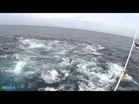 EPIC TUNA frenzy in Panama!!! Turn up the volume!!