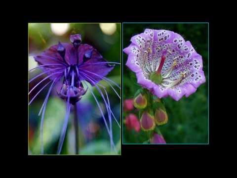 Celebration of flowers (HD1080p)