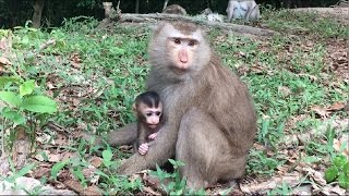 Which Mother Doesn't Love Child-As Monkey Mom Love Cute Baby Monkeys Man #73