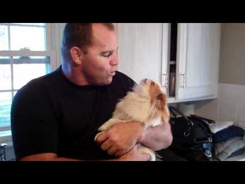 Japanese Chin Rosie And Daddy Singing Together video