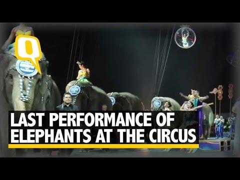 The Quint: Ringling Bros. Circus Bids Farewell To Its Performing Elephants