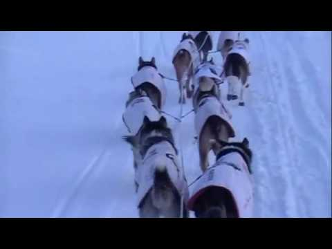 Iditarod Sled Dogs. and the Iditarod sled dogs