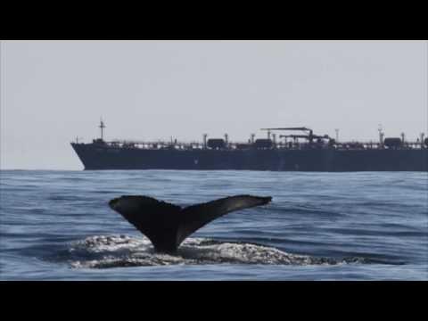 Whale Alert App!